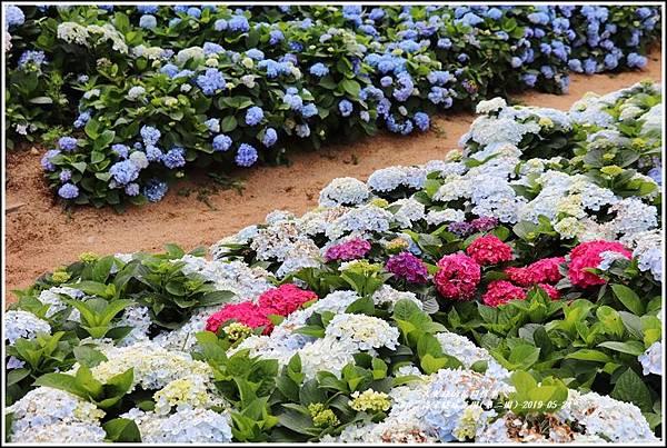 高家繡球花園(第二園)-2019-05-12.jpg
