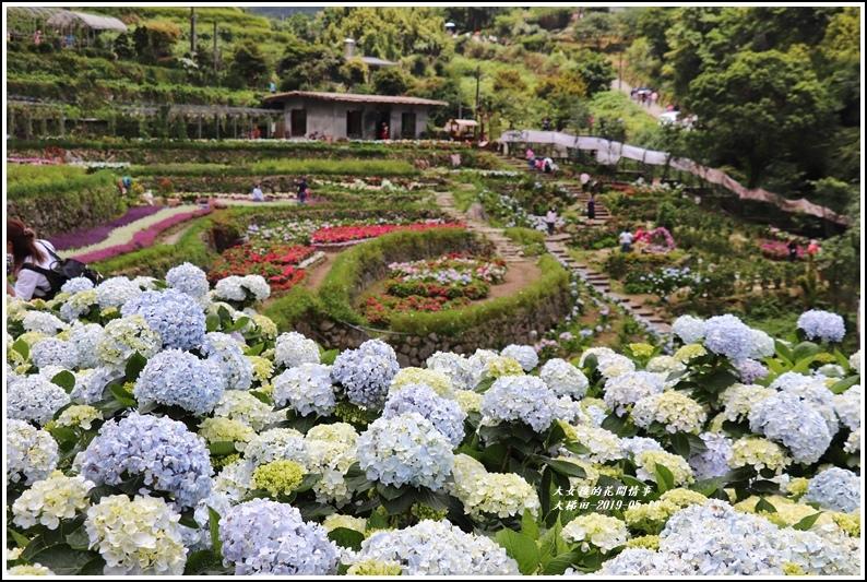 大梯田花卉生態農場-2019-05-15.jpg