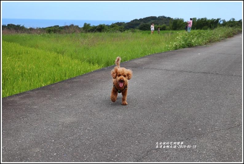 長濱金剛大道-2019-05-27.jpg