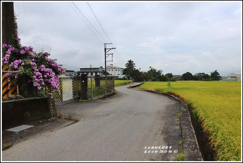 春日稻香情-2019-06-05.jpg