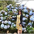 赤柯山繡球花-2019-06-15.jpg