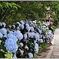 赤柯山繡球花-2019-06-28.jpg