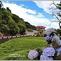 赤柯山繡球花-2019-06-34.jpg