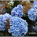赤柯山繡球花-2019-06-38.jpg