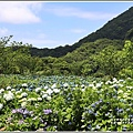 大梯田花卉生態農園-2019-05-01.jpg