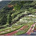 大梯田花卉生態農園-2019-05-003.jpg