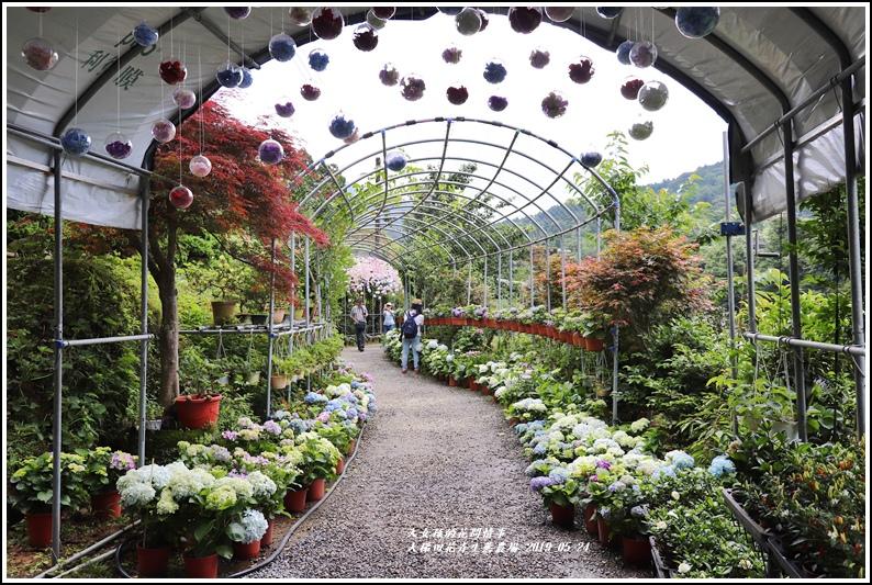 大梯田花卉生態農園-2019-05-009.jpg