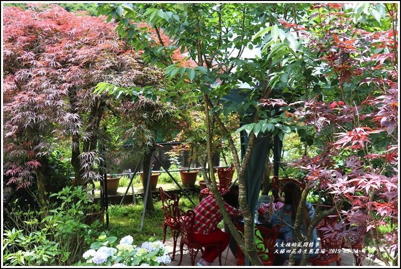 大梯田花卉生態農園-2019-05-011.jpg