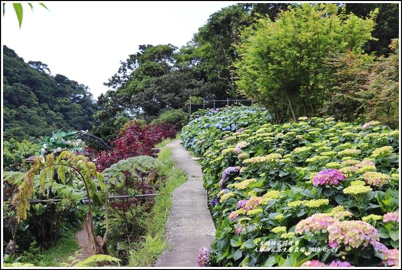 大梯田花卉生態農園-2019-05-012.jpg