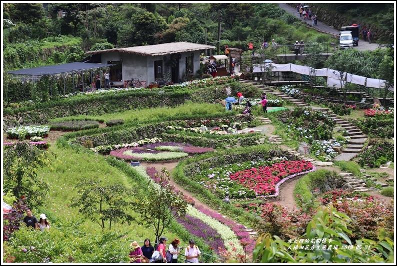 大梯田花卉生態農園-2019-05-015.jpg