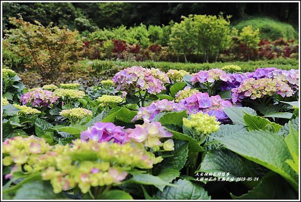 大梯田花卉生態農園-2019-05-016.jpg