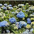 大梯田花卉生態農園-2019-05-018.jpg