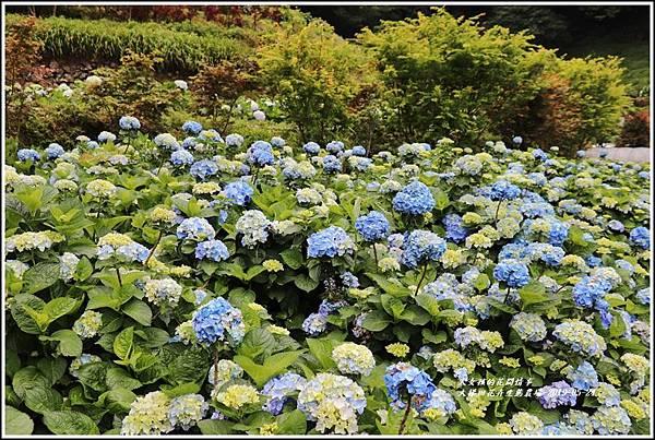 大梯田花卉生態農園-2019-05-019.jpg