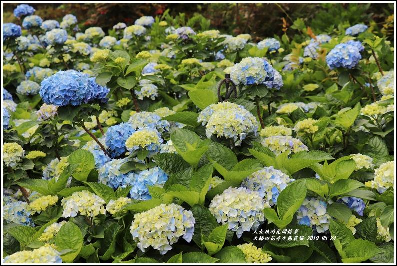 大梯田花卉生態農園-2019-05-021.jpg
