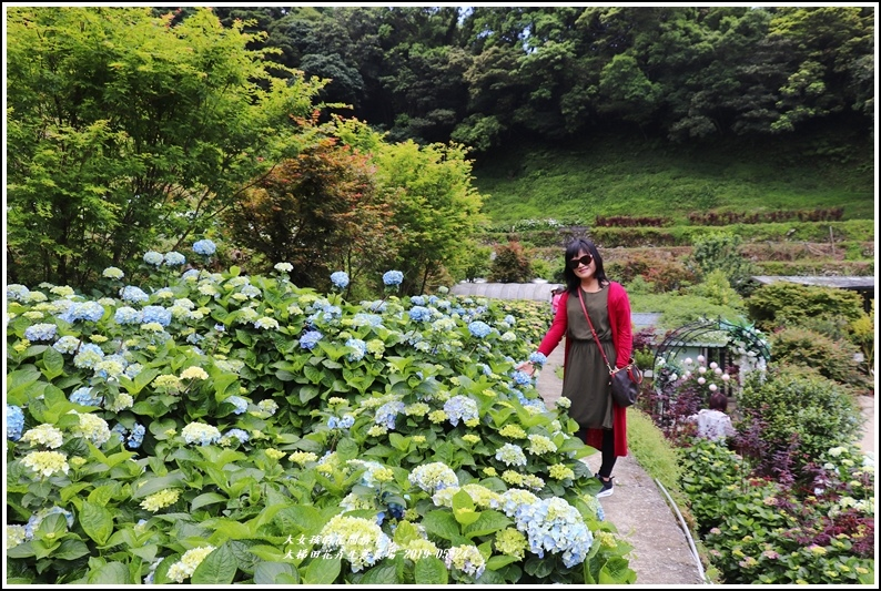大梯田花卉生態農園-2019-05-022.jpg