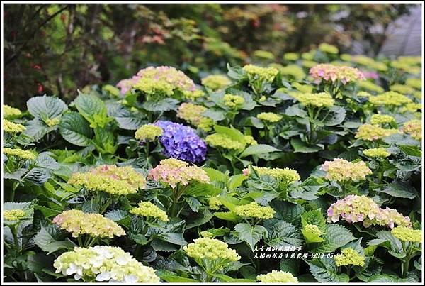 大梯田花卉生態農園-2019-05-024.jpg