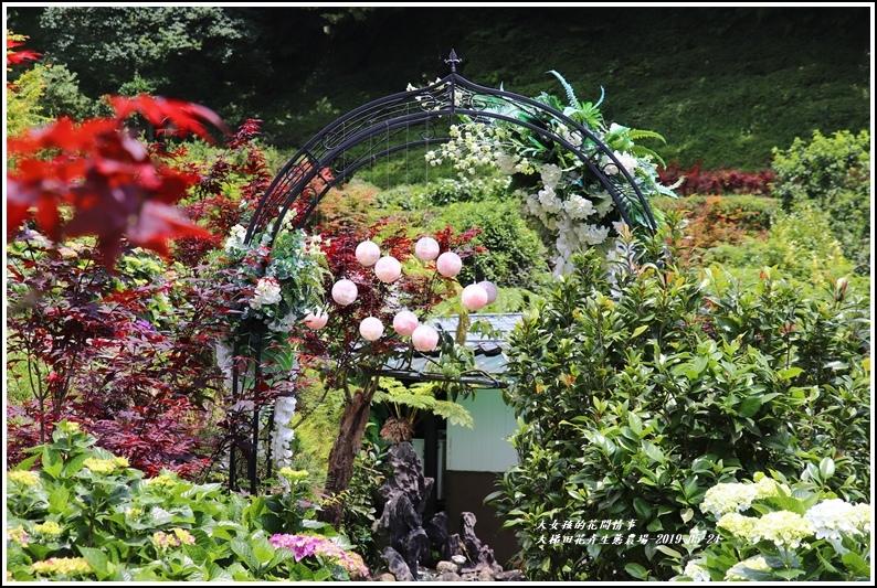 大梯田花卉生態農園-2019-05-027.jpg