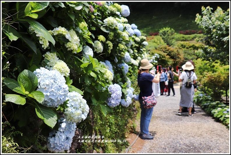 大梯田花卉生態農園-2019-05-031.jpg