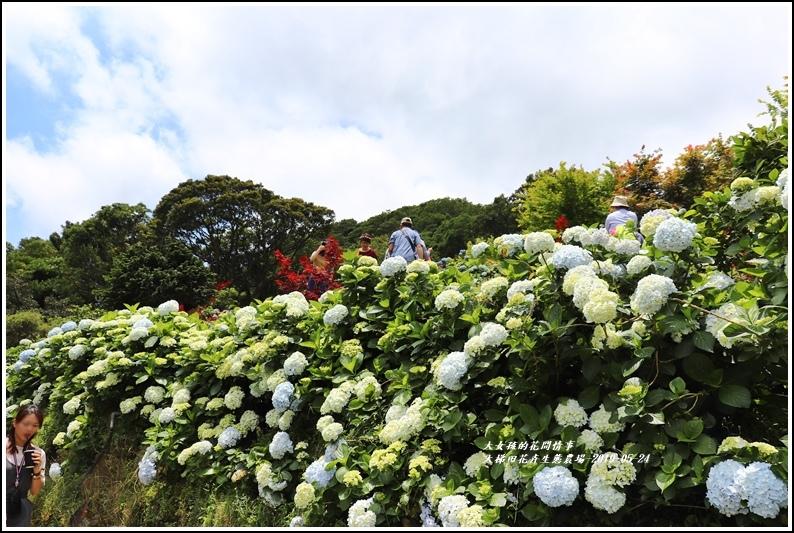 大梯田花卉生態農園-2019-05-033.jpg
