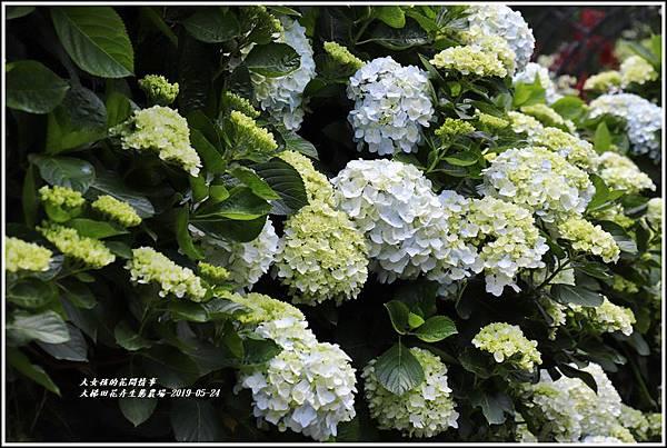 大梯田花卉生態農園-2019-05-035.jpg