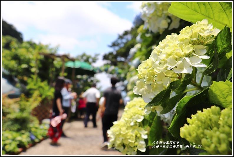 大梯田花卉生態農園-2019-05-036.jpg