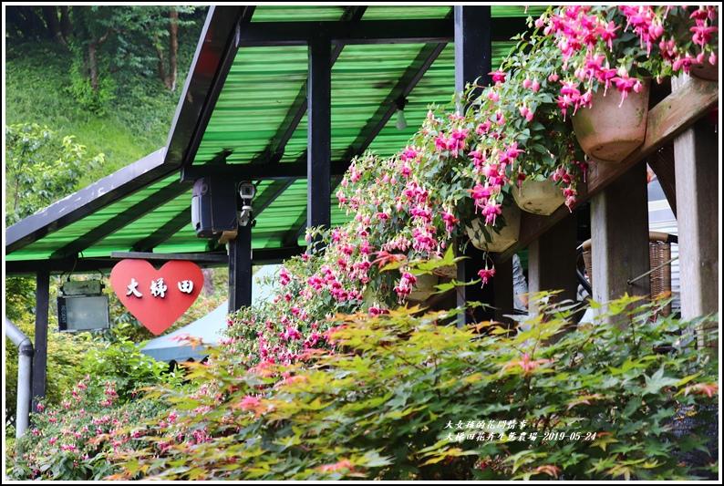 大梯田花卉生態農園-2019-05-039.jpg