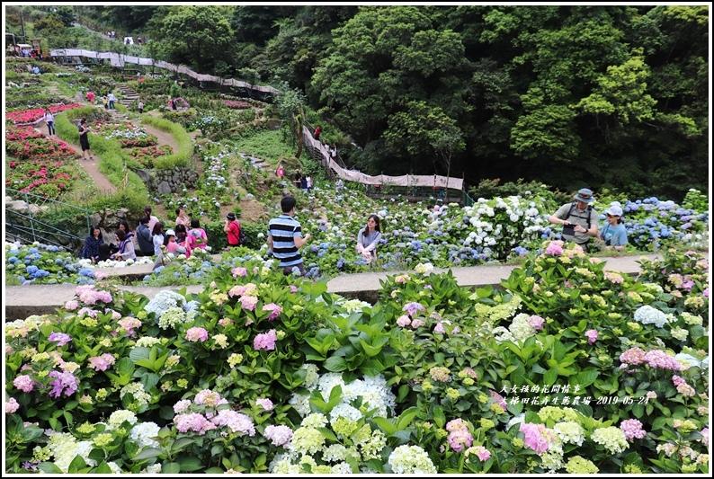大梯田花卉生態農園-2019-05-042.jpg