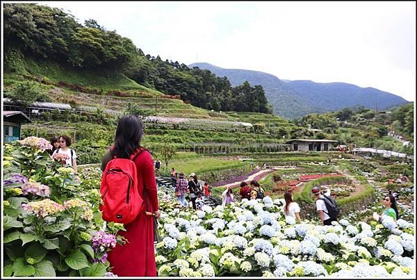 大梯田花卉生態農園-2019-05-043.jpg
