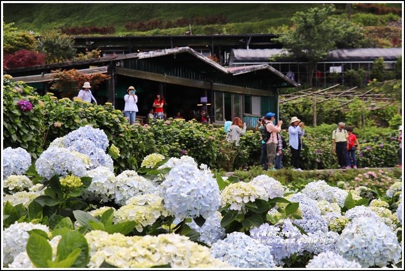 大梯田花卉生態農園-2019-05-046.jpg