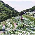 大梯田花卉生態農園-2019-05-049.jpg
