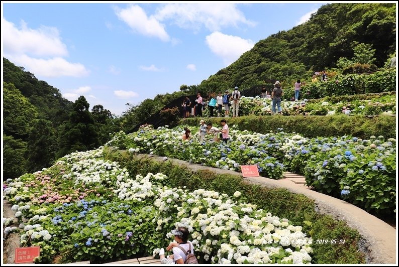 大梯田花卉生態農園-2019-05-050.jpg