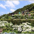 大梯田花卉生態農園-2019-05-051.jpg