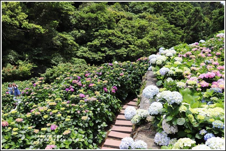 大梯田花卉生態農園-2019-05-052.jpg