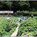 大梯田花卉生態農園-2019-05-053.jpg
