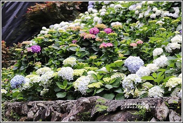 大梯田花卉生態農園-2019-05-055.jpg