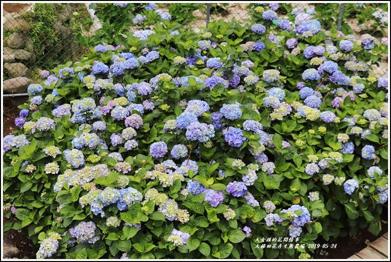 大梯田花卉生態農園-2019-05-056.jpg