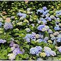 大梯田花卉生態農園-2019-05-057.jpg