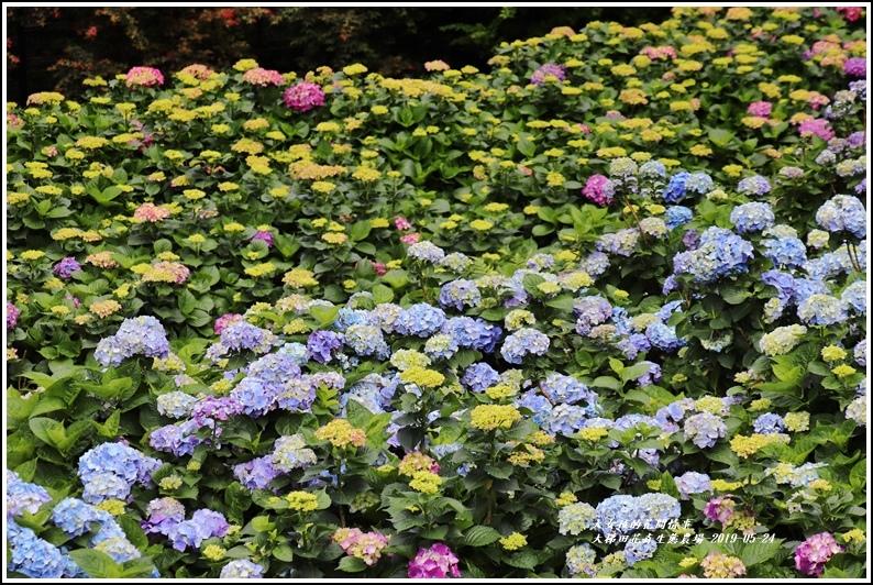 大梯田花卉生態農園-2019-05-058.jpg