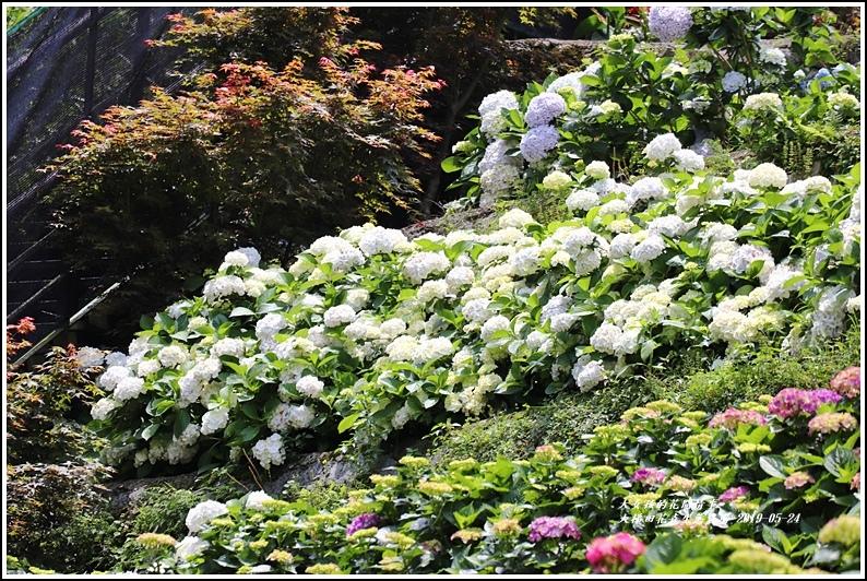 大梯田花卉生態農園-2019-05-059.jpg