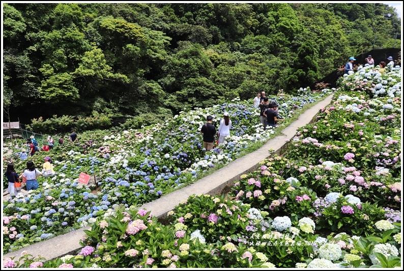 大梯田花卉生態農園-2019-05-063.jpg