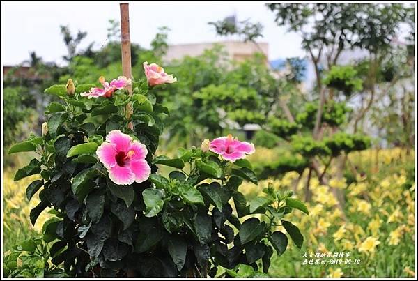 嘉德花田-2019-06-24.jpg