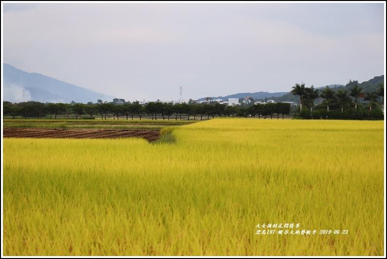 漂鳥197-縱谷大地藝術季-2019-06-55.jpg