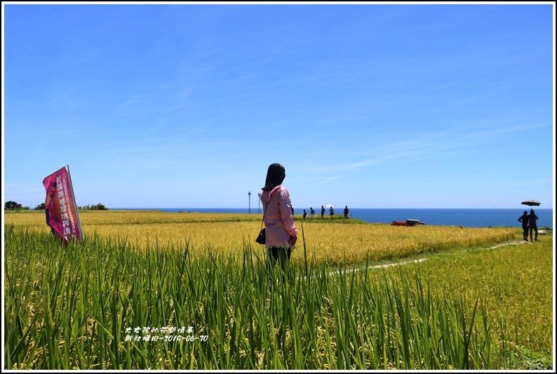 新社梯田-2019-06-21.jpg