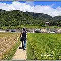 新社梯田-2019-06-23.jpg