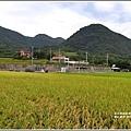 新社梯田-2019-06-37.jpg