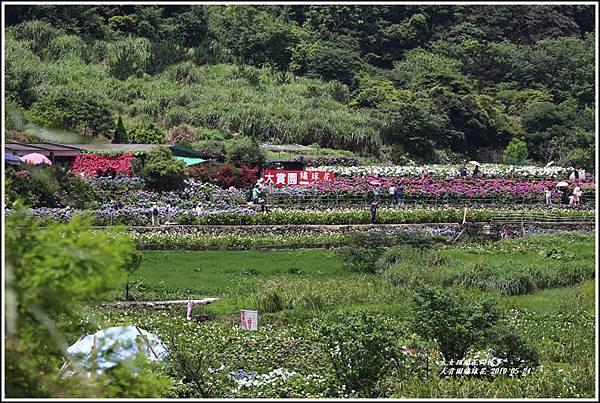 大賞園繡球花(竹子湖)-2019-05-01.jpg
