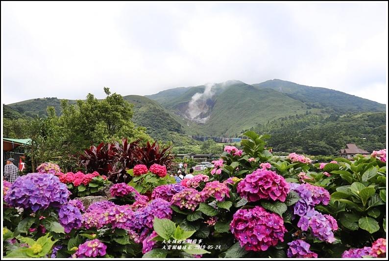 大賞園繡球花(竹子湖)-2019-05-03.jpg