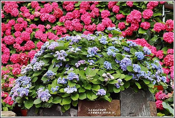 大賞園繡球花(竹子湖)-2019-05-05.jpg