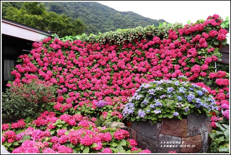 大賞園繡球花(竹子湖)-2019-05-07.jpg