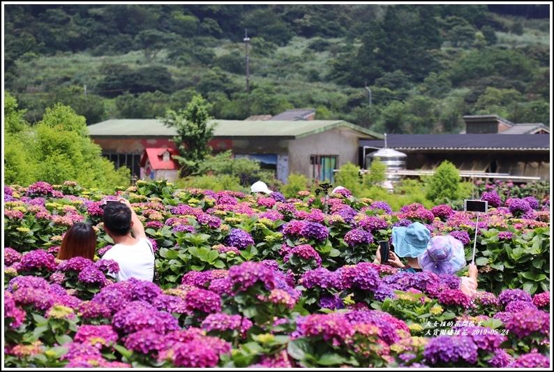 大賞園繡球花(竹子湖)-2019-05-10.jpg
